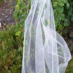 Single Layer Bridal Veil - 36 Inch